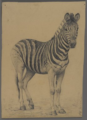 Philip H. Wolfrom (American, 1870-1904). Zebra, n.d. Graphite on paper, Sheet: 9 1/2 x 7 3/4 in. (24.1 x 19.7 cm). Brooklyn Museum, Gift of Anna Wolfrom Dove, 27.852