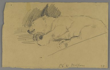 Philip H. Wolfrom (American, 1870-1904). Sleeping Polar Bear, n.d. Graphite on paper, Sheet: 6 1/8 x 9 7/8 in. (15.6 x 25.1 cm). Brooklyn Museum, Gift of Anna Wolfrom Dove, 27.853