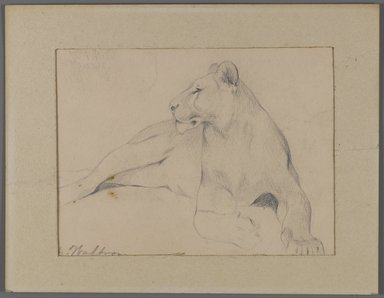 Philip H. Wolfrom (American, 1870-1904). Seated Lioness (recto) and Head of Sleeping Lion (verso), n.d. Graphite on paper affixed to window mat, Sheet: 5 1/2 x 8 15/16 in. (14 x 22.7 cm). Brooklyn Museum, Gift of Anna Wolfrom Dove, 27.854