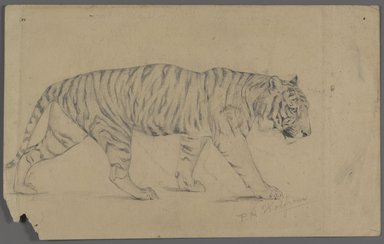 Philip H. Wolfrom (American, 1870-1904). Striding Tiger, n.d. Graphite on paper, Sheet: 5 5/8 x 9 in. (14.3 x 22.9 cm). Brooklyn Museum, Gift of Anna Wolfrom Dove, 27.855