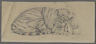 Philip H. Wolfrom (American, 1870-1904). Sleeping Tiger, n.d. Graphite on paper, Sheet: 3 9/16 x 8 in. (9 x 20.3 cm). Brooklyn Museum, Gift of Anna Wolfrom Dove, 27.856
