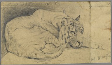 Philip H. Wolfrom (American, 1870-1904). Sleeping Tiger, n.d. Graphite on paper, Sheet: 3 7/8 x 6 3/4 in. (9.8 x 17.1 cm). Brooklyn Museum, Gift of Anna Wolfrom Dove, 27.857