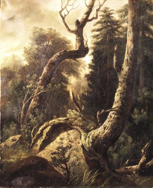 Unknown (formerly attributed to Asher B. Durand). Forest Landscape, ca. 1850s. Oil on canvas, 21 15/16 x 18 1/16 in. (55.8 x 45.9 cm). Brooklyn Museum, Gift of Alfred W. Jenkins, 30.966