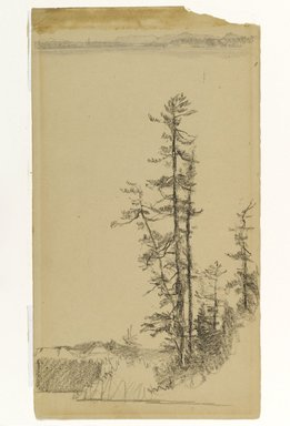 Homer Dodge Martin (American, 1836-1897). Trees, n.d. Black crayon and graphite on cream, moderately thick, smooth wove paper, Sheet: 13 1/16 x 7 1/4 in. (33.2 x 18.4 cm). Brooklyn Museum, Gift of Mrs. William A. Putnam, 36.488