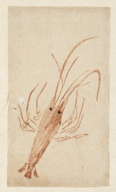 E-Goyomi (Red Lobster), 1780-1785. Color print, sheet: 5 5/16 x 3 1/16 in. (13.5 x 7.7 cm). Brooklyn Museum, By exchange, 37.442