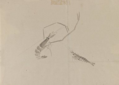 Drawing of Two Crayfish, 18th-19th century. Ink on paper, 9 13/16 x 13 3/4 in. (25 x 35 cm). Brooklyn Museum, By exchange, 39.356
