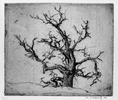 Abraham Walkowitz (American, born Russia, 1878-1965). Tree, 1900. Etching Brooklyn Museum, Gift of the artist, 39.474