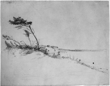 William Sidney Mount (American, 1807-1868). Trees in Wind, n.d. Graphite on paper, Sheet: 10 5/8 x 13 7/16 in. (27 x 34.1 cm). Brooklyn Museum, Augustus Graham School of Design Fund, 42.252