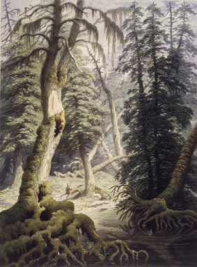 George Harvey (American, 1801-1878). A Cedar Swamp. Watercolor Brooklyn Museum, Dick S. Ramsay Fund, 46.51
