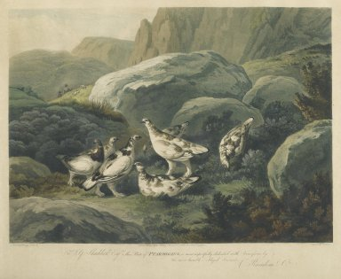F. C. Lewis (British, active 1916). Ptarmigans. Engraving Brooklyn Museum, Gift of Harry W. Havemeyer, 54.34.4