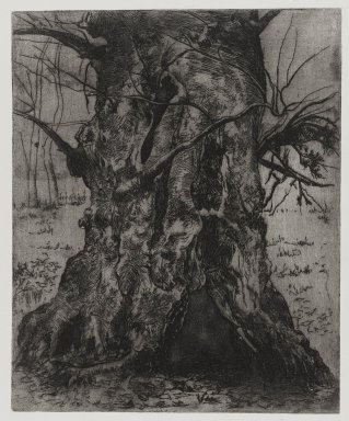 Joseph Stella (American, born Italy, 1877-1946). Tree Trunk, 1957. Etching Brooklyn Museum, Gift of Nathan Krueger, 57.126.1