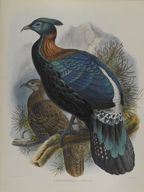 John Gould (British, 1804-1881). Lophophorus L'Huysii. Lithograph on wove paper, Sheet: 23 3/8 x 18 7/16 in. (59.4 x 46.8 cm). Brooklyn Museum, Gift of the Estate of Emily Winthrop Miles, 64.98.184