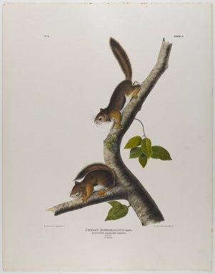 John James  Audubon (American, born Haiti, 1785-1851). Columbian Squirrel. Lithograph, 28 x 21 7/8 in. (71.1 x 55.6 cm). Brooklyn Museum, Gift of the Estate of Emily Winthrop Miles, 64.98.24