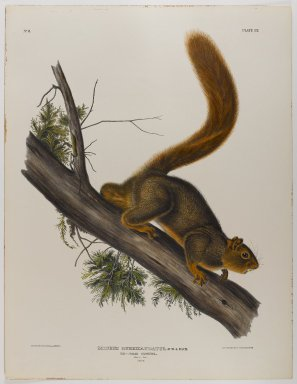 John J. Audubon (American, 1785-1851). Brown or Norway Rat, Red-Tailed Squirrel. Lithograph, 27 x 21 in. (68.6 x 53.3 cm). Brooklyn Museum, Gift of the Estate of Emily Winthrop Miles, 64.98.44