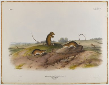Brooklyn Museum: Jumping Mouse