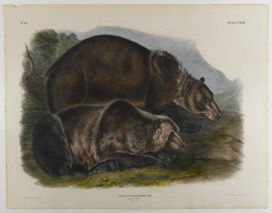 John J. Audubon (American, 1785-1851). Grizzley Bear. Lithograph, 21 x 27 in. (53.3 x 68.6 cm). Brooklyn Museum, Gift of the Estate of Emily Winthrop Miles, 64.98.67