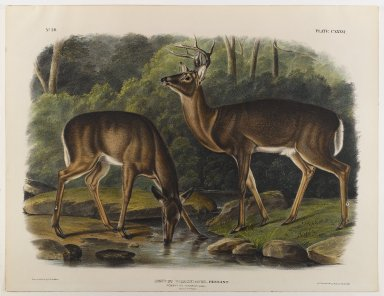 John James  Audubon (American, born Haiti, 1785-1851). Common or Virginian Deer. Lithograph, 21 x 27 in. (53.3 x 68.6 cm). Brooklyn Museum, Gift of the Estate of Emily Winthrop Miles, 64.98.69