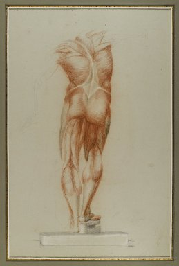 Brooklyn Museum: Écorché (Figure Study of Musculature)