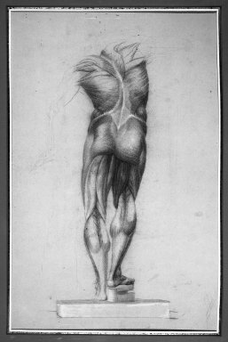 Daniel Huntington (American, 1816-1906). Écorché (Figure Study of Musculature), ca. 1848. Red, brown, white, and black crayon with graphite underdrawing on blue-green, medium-weight, slightly textured wove paper, Sheet: 21 3/4 x 14 15/16 in. (55.2 x 37.9 cm). Brooklyn Museum, Gift of The Roebling Society, 68.167.4