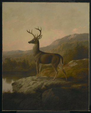 Thomas Hewes Hinckley (American, 1813-1896). Deer, 1855. Oil on canvas, 36 1/8 x 28 15/16 in. (91.8 x 73.5 cm). Brooklyn Museum, Dick S. Ramsay Fund, 68.95