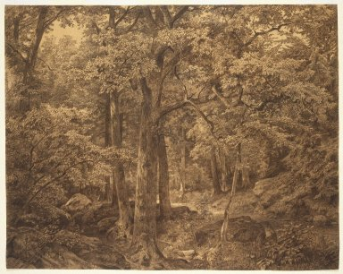 William Trost Richards (American, 1833-1905). Forest Interior, 1865. Charcoal and chalk on paper, 23 5/16 x 29 7/16 in. (59.2 x 74.8 cm). Brooklyn Museum, Gift of Edith Ballinger Price, 72.32.3