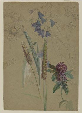 William Trost Richards (American, 1833-1905). Flower Study, July 9-14, 1860. Opaque watercolor and graphite on moderately thick, slightly textured brown wove paper, Sheet: 8 1/8 x 5 5/8 in. (20.6 x 14.3 cm). Brooklyn Museum, Gift of Edith Ballinger Price, 72.32.9