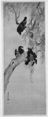 Yasuda Genshi (Japanese, died 1792). Three Myna Birds in a Willow Tree, late 18th century. Hanging scroll, ink and color on silk, Image: 40 x 14 1/4 in. (101.6 x 36.2 cm). Brooklyn Museum, By exchange, 74.113