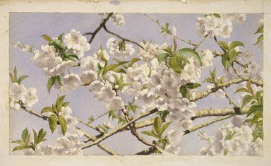 John William Hill (American, 1812-1879). Apple Blossoms, ca. 1874. Watercolor on paper, 8 13/16 x 15 1/2 in. (22.4 x 39.4 cm). Brooklyn Museum, Designated Purchase Fund, 74.170