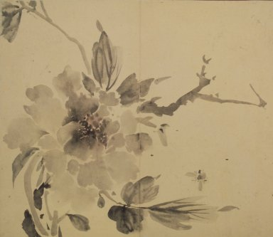 Peony and Bumblebee, 19th century. Ink and light color on paper, 11 1/2 x 13 1/4 in.  (29.2 x 33.7 cm). Brooklyn Museum, Designated Purchase Fund, 75.125.9
