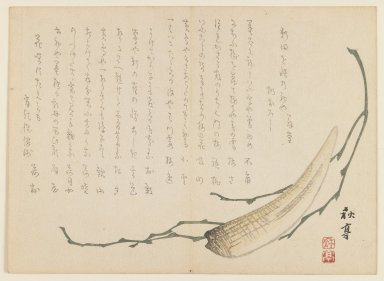 Ryosai (Japanese). Seaweed and Shellfish, ca. 1830. Woodblock print, 7 1/8 x 9 3/4 in. (18.1 x 24.8 cm). Brooklyn Museum, Gift of Dr. and Mrs. Stanley L. Wallace, 79.190.7