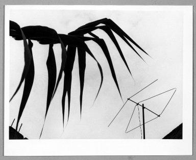 Manuel Alvarez Bravo (Mexican, 1902-2002). Carrizo y Tele, 1976. Gelatin silver photograph, image: 6 7/8 x 9 1/8 in. (17.5 x 23.2 cm). Brooklyn Museum, Gift of William Berley, 79.294.1. © Colette Urbajtel/Asociación Manuel Álvarez Bravo
