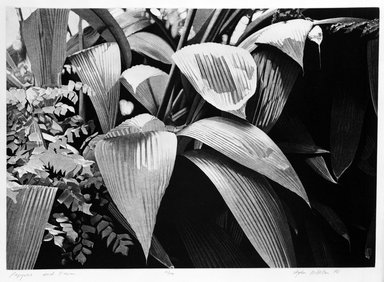 Stephen McMillan (American, born 1949). Papyrus and Fern, 1978. Aquatint and etching on paper, sheet: 22 1/4 x 29 in.  (56.5 x 73.7 cm);. Brooklyn Museum, Gift of ADI Gallery, 79.37.12. © Stephen McMillan