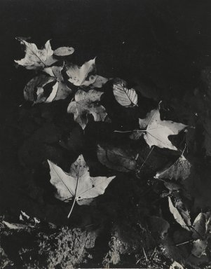 Consuelo Kanaga (American, 1894-1978). [Untitled] (Leaves Floating in Water). Gelatin silver photograph, Flush Mounted: 10 1/2 x 13 1/4 in. (26.7 x 33.7 cm). Brooklyn Museum, Gift of Wallace B. Putnam from the Estate of Consuelo Kanaga, 82.65.112