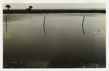 Consuelo Kanaga (American, 1894-1978). [Untitled] (Barbed Wire Fence, Florida), 1950. Toned gelatin silver photograph, 4 3/4 x 7 1/2 in. (12.1 x 19.1 cm). Brooklyn Museum, Gift of Wallace B. Putnam from the Estate of Consuelo Kanaga, 82.65.142