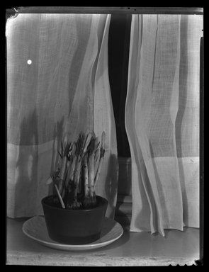 Consuelo Kanaga (American, 1894-1978). [Untitled]. Cellulose nitrate negative, 8 7/8 x 6 7/8 in. (22.5 x 17.5 cm). Brooklyn Museum, Gift of Wallace B. Putnam from the Estate of Consuelo Kanaga, 82.65.1990