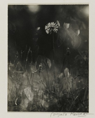 Consuelo Kanaga (American, 1894-1978). [Untitled] (Weeds). Gelatin silver photograph, 3 7/8 x 3 in. (9.8 x 7.6 cm). Brooklyn Museum, Gift of Wallace B. Putnam from the Estate of Consuelo Kanaga, 82.65.2234