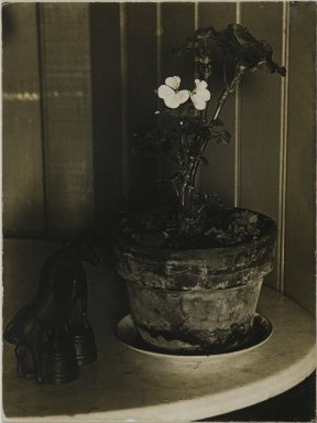 Consuelo Kanaga (American, 1894-1978). [Untitled] (Potted Plant). Gelatin silver photograph, 3 7/8 x 3 in. (9.8 x 7.6 cm). Brooklyn Museum, Gift of Wallace B. Putnam from the Estate of Consuelo Kanaga, 82.65.2235