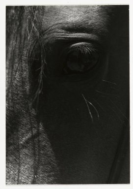Consuelo Kanaga (American, 1894-1978). [Untitled] (Horse's Eye). Gelatin silver photograph, Image: 5 1/2 x 3 7/8 in. (14 x 9.8 cm). Brooklyn Museum, Gift of Wallace B. Putnam from the Estate of Consuelo Kanaga, 82.65.26
