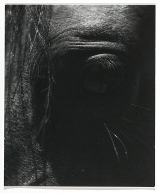 Consuelo Kanaga (American, 1894-1978). [Untitled] (Horse's Eye). Gelatin silver photograph, 4 x 3 1/2 in. (10.2 x 8.9 cm). Brooklyn Museum, Gift of Wallace B. Putnam from the Estate of Consuelo Kanaga, 82.65.275