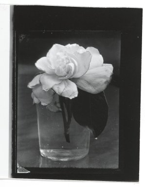 Consuelo Kanaga (American, 1894-1978). [Untitled] (Gardenia in Glass). Gelatin silver photograph, Other: 5 x 4 in. (12.7 x 10.2 cm). Brooklyn Museum, Gift of Wallace B. Putnam from the Estate of Consuelo Kanaga, 82.65.327