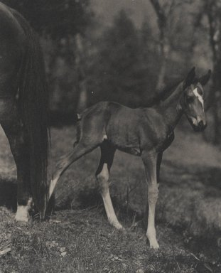Consuelo Kanaga (American, 1894-1978). [Untitled] (Foal), 1950s. Toned gelatin silver photograph, 9 1/4 x 7 1/2 in. (23.5 x 19.1 cm). Brooklyn Museum, Gift of Wallace B. Putnam from the Estate of Consuelo Kanaga, 82.65.32