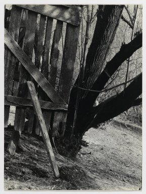 Consuelo Kanaga (American, 1894-1978). [Untitled] (Fence and Tree). Gelatin silver photograph, 8 5/8 x 6 3/8 in. (21.9 x 16.2 cm). Brooklyn Museum, Gift of Wallace B. Putnam from the Estate of Consuelo Kanaga, 82.65.340
