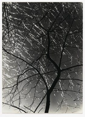 Consuelo Kanaga (American, 1894-1978). [Untitled] (Ice Storm). Gelatin silver photograph, 9 1/2 x 7 in. (24.1 x 17.8 cm). Brooklyn Museum, Gift of Wallace B. Putnam from the Estate of Consuelo Kanaga, 82.65.345