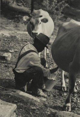 Consuelo Kanaga (American, 1894-1978). [Untitled] (Milking Cow, Tennessee). Gelatin silver photograph, 4 7/8 x 3 3/8 in. (12.4 x 8.6 cm). Brooklyn Museum, Gift of Wallace B. Putnam from the Estate of Consuelo Kanaga, 82.65.41