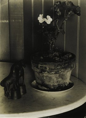 Consuelo Kanaga (American, 1894-1978). House Plant, 1930. Bromide print, 3 7/8 x 2 7/8 in. (9.8 x 7.3 cm). Brooklyn Museum, Gift of Wallace B. Putnam from the Estate of Consuelo Kanaga, 82.65.425