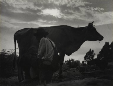 Consuelo Kanaga (American, 1894-1978). Milking Time, 1948. Gelatin silver photograph, Image: 3 5/8 x 4 3/4 in. (9.2 x 12.1 cm). Brooklyn Museum, Gift of Wallace B. Putnam from the Estate of Consuelo Kanaga, 82.65.426
