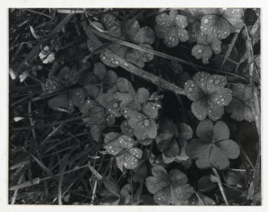Consuelo Kanaga (American, 1894-1978). [Untitled] (Dew on Grass). Gelatin silver photograph, Image: 4 3/4 x 3 3/4 in. (12.1 x 9.5 cm). Brooklyn Museum, Gift of Wallace B. Putnam from the Estate of Consuelo Kanaga, 82.65.43