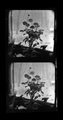 Brooklyn Museum: [Untitled]