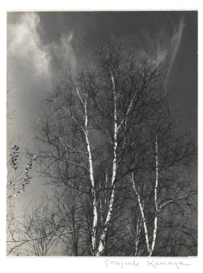 Consuelo Kanaga (American, 1894-1978). Birches, mid 1960s. Gelatin silver photograph, Image: 5 x 3 7/8 in. (12.7 x 9.8 cm). Brooklyn Museum, Gift of Wallace B. Putnam from the Estate of Consuelo Kanaga, 82.65.99