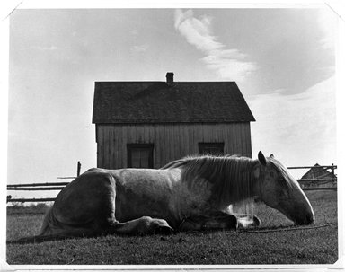 "Walter Rosenblum (American, 1919-2006). ""Horse. Gaspe"" Canada, 1951. Gelatin silver photograph on white wove paper, sheet: 11 x 14 in.  (27.9 x 35.6 cm); image: 10 1/2 x 13 1/2 in. (26.7 x 34.3 cm). Brooklyn Museum, Gift of Lisa Rosenblum, 84.236.11. © Rosenblum Archive"
